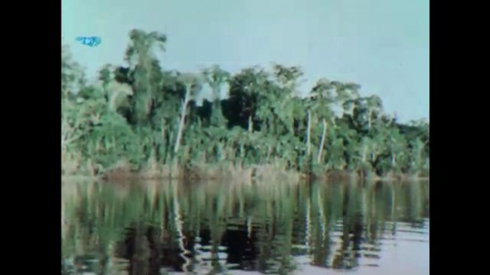 UNITED STATES 1950s: View of forest from river / Man carries dead bird / People planting plants / Closer view, person planting / Globe with equator line.