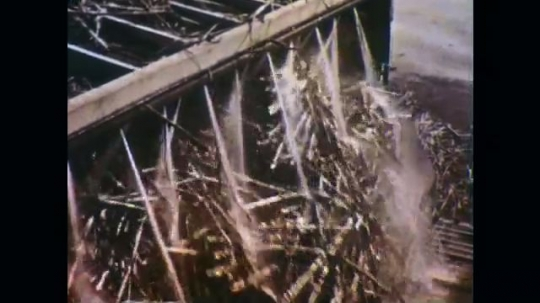 UNITED STATES, 1950s: Sugar cane being sprayed as it gets dropped into chute at factory. Sugar cane plants on a conveyor belt. Sugar cane on a chute as it enters factory.