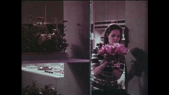 UNITED STATES: 1960s: Lady in kitchen smells flowers. Lady puts flowers in vase on laid table. Man and boy appear on computer screens in room.