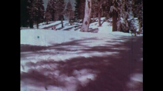 UNITED STATES: 1950s. Children playing on snow sledges in forest. Diagram showing heat coming from Sun towards Earth.