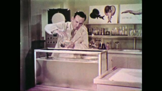 UNITED STATES: 1950s: Scientist releases fish into tank with electric eel. Electric eel takes gulp of air from water surface.