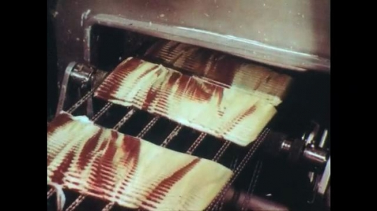 UNITED STATES: 1950s: ham on machine. Workers pick food from soil. Cucumbers on conveyor.