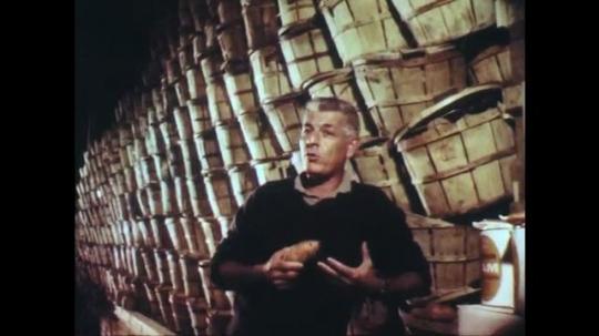 UNITED STATES: 1950s: man talks to camera about sweet potato.