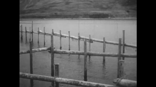 ALASKA: 1930s: fishing zone on water. Fishing nets attached to wooden poles.