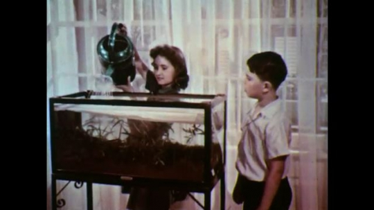 UNITED STATES: 1950s: girl fills tank with water. Boy removes paper from tank.