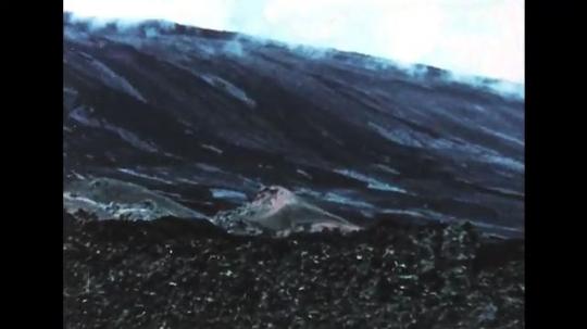 GALAPAGOS: 1950s: iguana inside hole in ground. Iguana leaves burrow