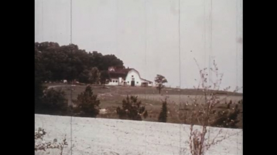 1970s: barn in a field.  Holstein cows graze in a pasture.