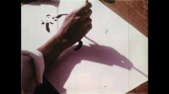 UNITED STATES: 1950s: hand draws on paper with ink. Man paints horse