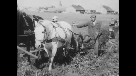 POLAND: 1960s: people work in field with horse and cart. Ladies pick up potatoes from ground. Overhead view of street. Fruits on market stall