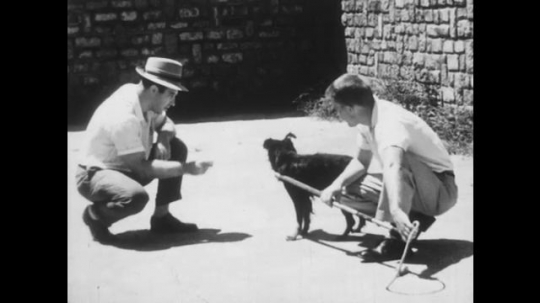 1950s: UNITED STATES: two men talk to dog. Dog in noose. Dog sits on ground. Man inspects dog