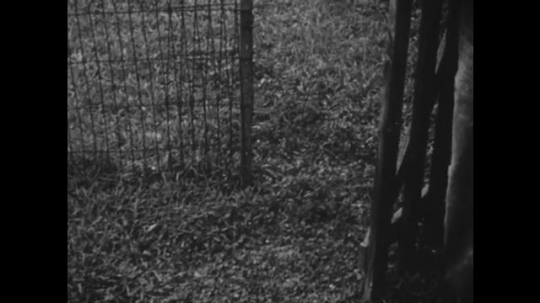 1950s: UNITED STATES: boy puts dog in enclosed area. Dog barks at man