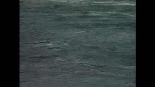 UNITED STATES: 1960s: Pacific salmon on river surface. Waterfall. Salmon jump up waterfall.