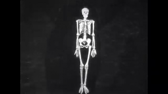 UNITED STATES: 1950s: image of spinal column and skeleton. Upper part of spinal column. Skull joins to spine.