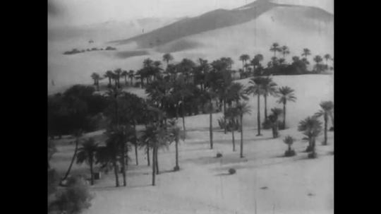AFRICA: 1930s: palm trees in desert. Expedition vehicles drive through desert