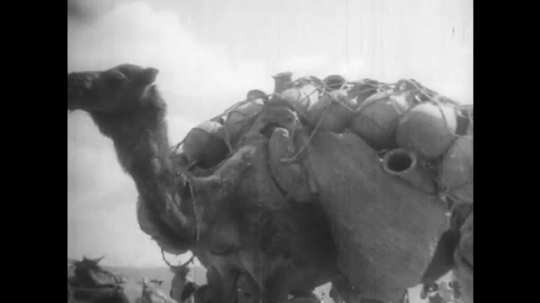 AFRICA: 1930s: loaded camel. Women work in market. Ring through lady
