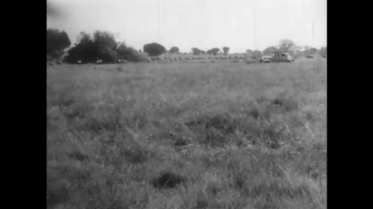 AFRICA: 1930s: Expedition vehicle drives along track towards herd of antelope. Animals cross path.