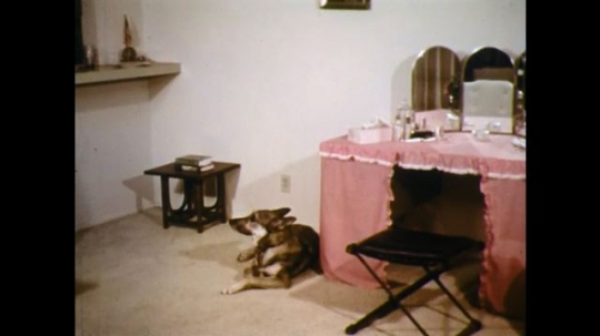 UNITED STATES: 1960s: dog sits by lady