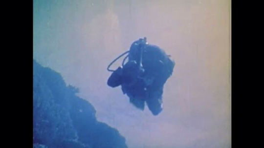 1970s: UNITED STATES: diver with spear gun on reef. Shark swims over reef. Fish and sharks on reef