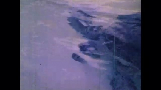 1970s: UNITED STATES: turtle swims in sea. Turtle pops head out of water. Turtle moves across beach. Fish in sea