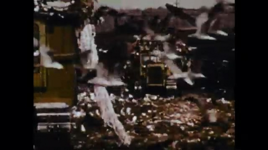 1970s: seagulls fly around construction equipment at garbage dump. white foamy water pours out of storm pipe into retaining pond.