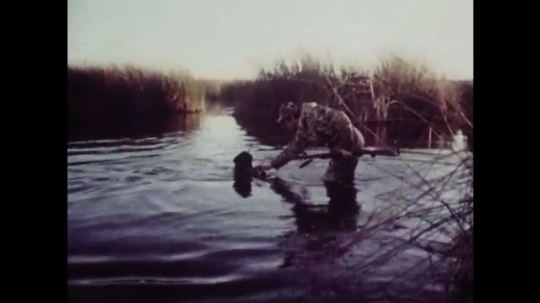 1980s: Man in marsh takes dead bird from dog. Man shoots bird, bird falls in water.