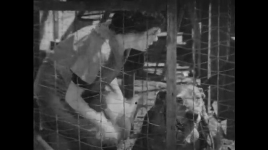 1920s: woman dresses dog in lion costume and locks cage. man puts leash on real lion.