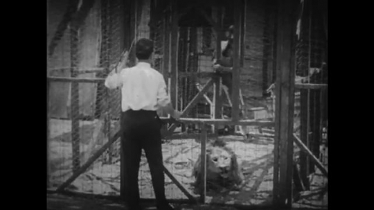 1920s: man holds leash of dog in lion costume to guide out of cage. man leads lion between cages. man shuts door.