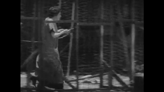 1920s: woman carries bowl to cage, spills water while opening door and guides lion out on leash.