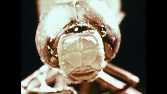 1960s: insect head stares straight ahead. fish swim past coral reef. gecko lizard balances on branch and looks around.