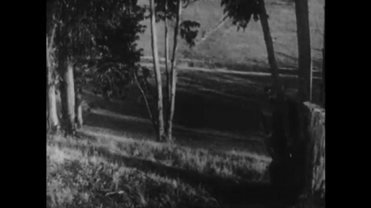 1910s: man with bushy mustache hunts in woods, aims rifle at tree, pulls trigger, shoots black cat and stumbles in a panic through field.