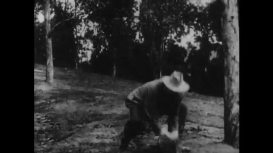 1910s: man with cowboy hat grabs lasso, runs through woods, throws rope over cliff and pulls. man with mustache tumbles down hill, dangles from tree banch and holds line.