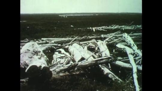 1950s: Broken driftwood logs scattered on grassy plain. Ship on still water