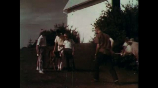 1960s: boys and girls pat brown calf as man leads brown cow with udders to front yard of barn on dairy farm.