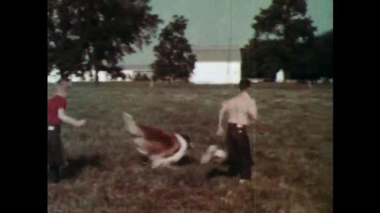 1960s: boys play and run through field with a Rough Collie and puppies at the farm.