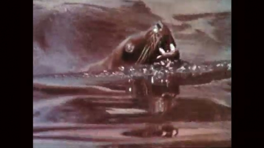 1950s: Sea lions swims in water with head out and mouth open. Zookeeper grabs fish out of bucket, sea lion catches fish in mouth and eats.