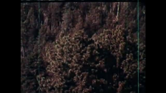 1970s: UNITED STATES: view of trees and wilderness. Deer looks at camera. Duck and ducklings. Bear cub in woods. Bird in tree