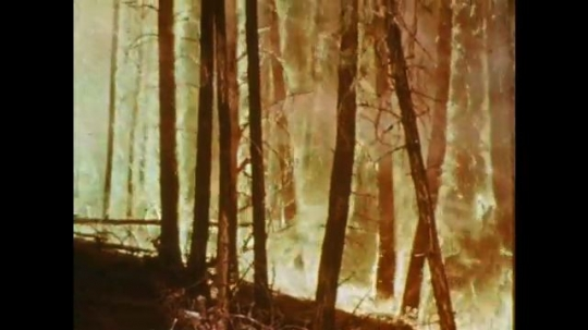 1970s: UNITED STATES: Flames in forest. Boy speaks. Man speaks to children. Close up of man's face. Woods catch fire