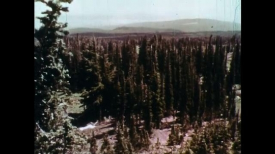 1970s: UNITED STATES: view across forest. Dead trees in woods. Boy sits in field. Boy listens. Children listen to man speak