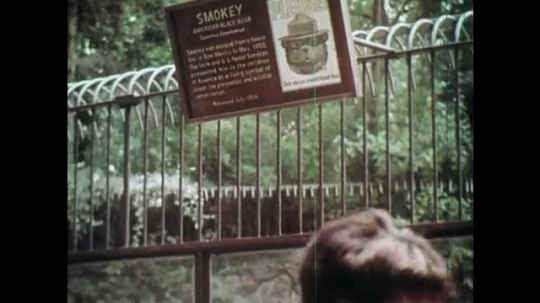 1970s: UNITED STATES: people visit bear in zoo. Bear in cage. Children in woods. Boy speaks