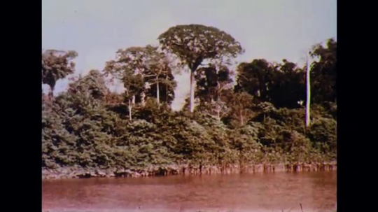 BRAZIL 1960s: Trees on shore of river. Children paddling in boat. Ship sailing on Amazon river.