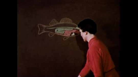 1950s: Woman colors in detail on illustration of fish on chalkboard. Woman in darkened room draws outline of body on chalkboard with felt pen.
