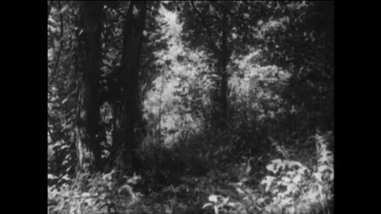 1940s: UNITED STATES: soldiers fire guns at enemy in woods. Man hit by bullet.