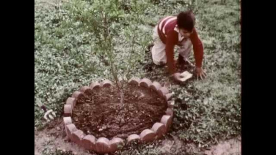 1960s: UNITED STATES: boy runs across garden. Boy sits on ground. Boy digs hole in soil. Boy opens packet of seeds.