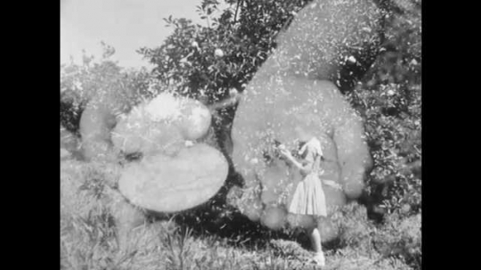 1950s: UNITED STATES: girl holds fruit and seeds in hands. Apple fruit and seeds. Child eats apple in orchard. Girl throws apple on ground