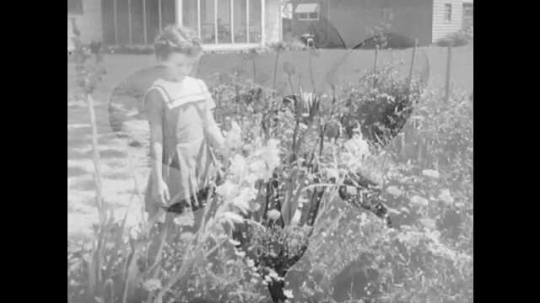 1950s: UNITED STATES: girl looks at flowers in garden. Tulip plant in ground. Hand holds tulip stem.