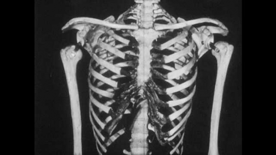 1950s: Man gestures to ribs on model skeleton. X-ray of beating heart and lungs. Chest of young man. Ball hits chest. Young man, poolside, throws ball.