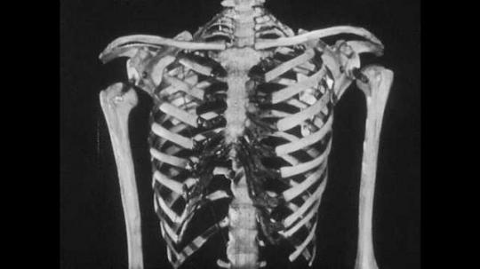 1950s: Man gestures to model skeleton