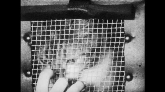 1940s: Close up, cat in carrier, hand scratches window. Woman helps girl put on coat. Girl walks out door. Kids look at bird in classroom.