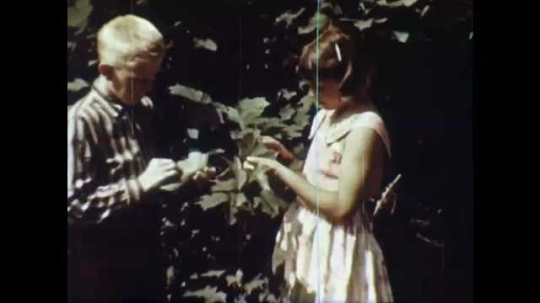 1950s: Boy and girl look at leaves on tree. Woman presses leaves between newsprint. Hands apply glue to leaves. Hands glue leaves to scrapbook page.