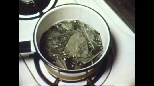 1950s: Pot of boiling water and leaves on stove top. Hand and tongs remove leaves and place them in bowl. Hand adds grain alcohol to leaves.  Leaves in bowl. Hand pours off alcohol into cylinder.
